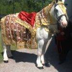 horse dressed in gold and red fabrics for Asian wedding